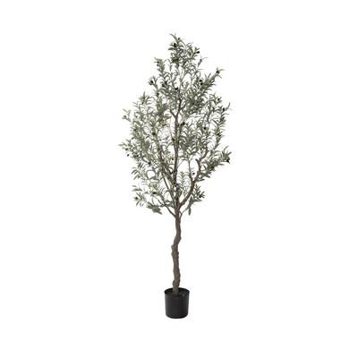 OLIVE TREE 210CM