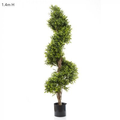 BOXWOOD SPIRAL TREE (1.4m)