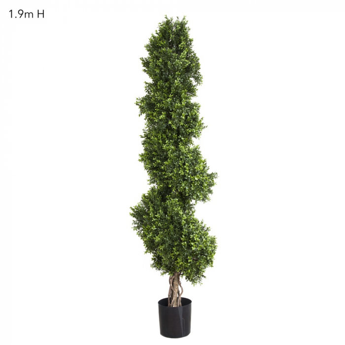 BOXWOOD SPIRAL TREE (1.9m)
