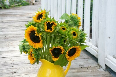 Bunch of Sunflowers - for Pickup