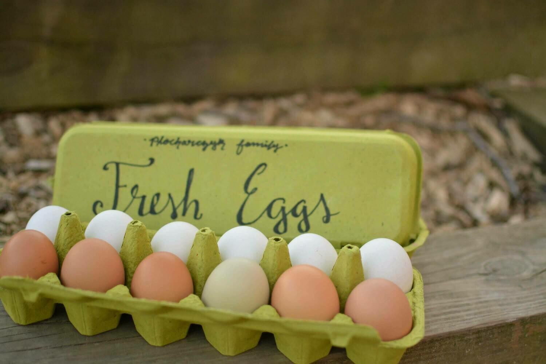 Available Now - 1 Dozen Eggs