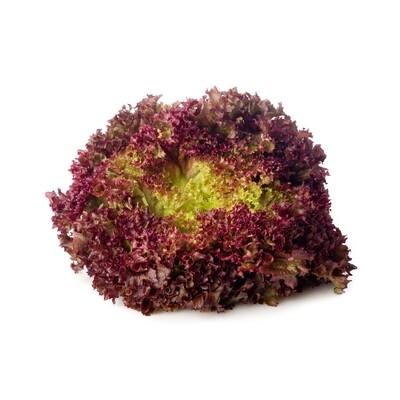 Lettuce, Hydroponic - Red Lollo Rossa (8 Oz.)