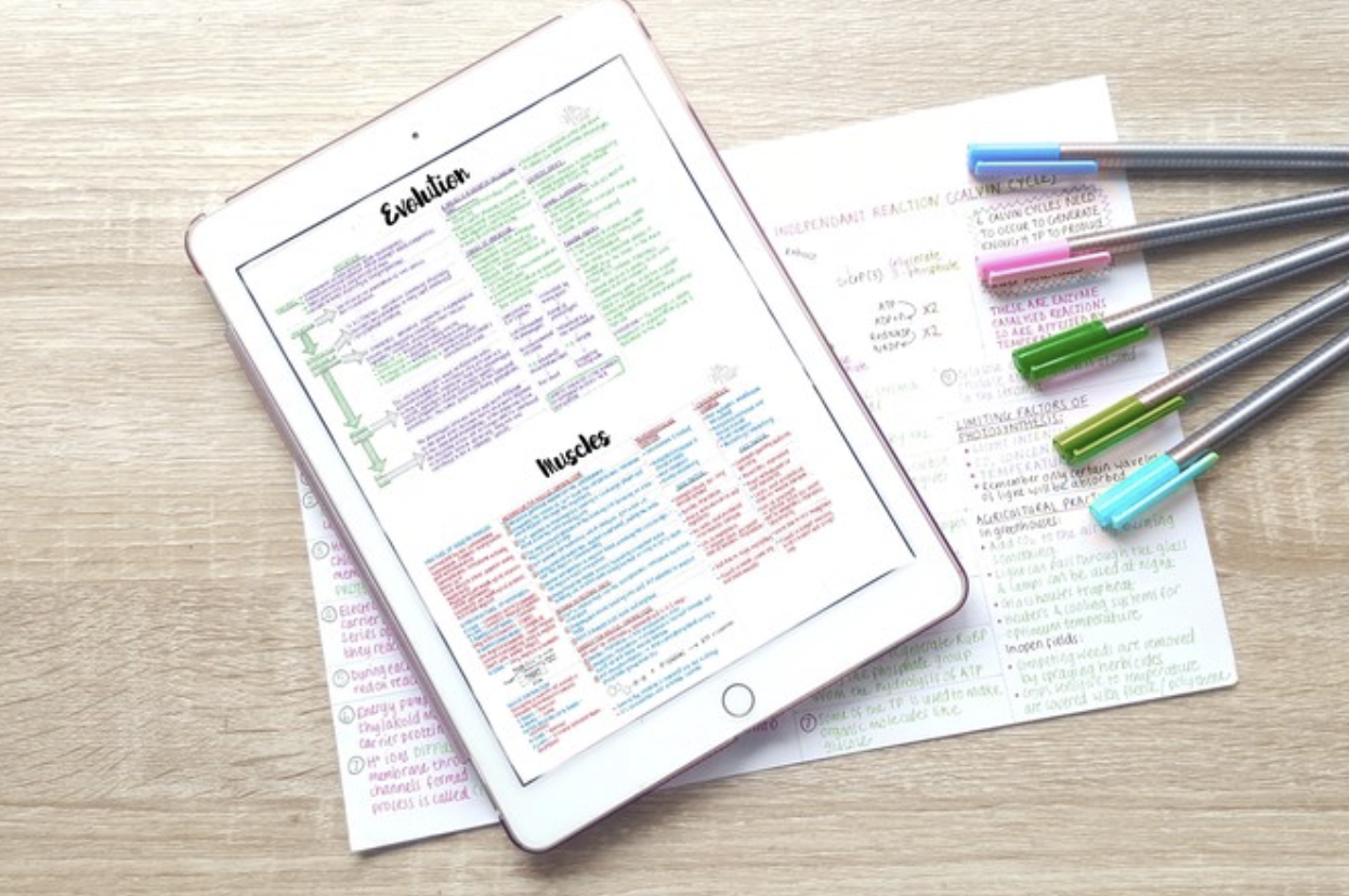 A-level Biology Notes | Year 2