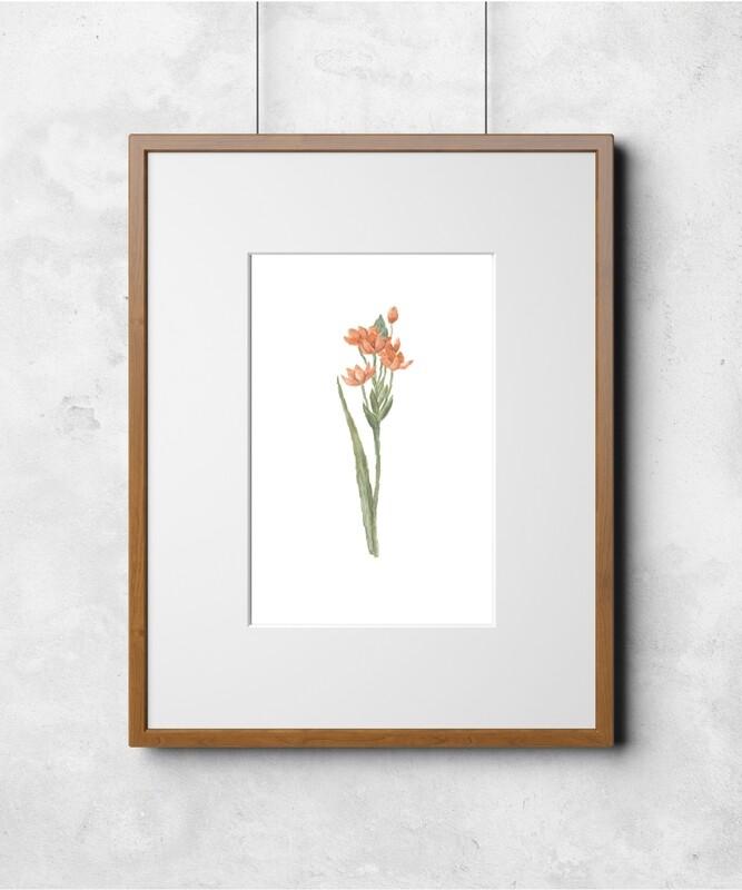 Fleur II Art Print