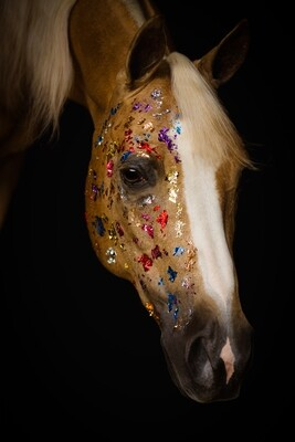 Colored Foil Horse - Photo Print