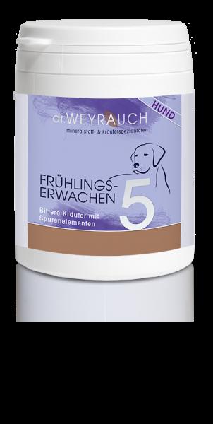Dr.Weyrauch Frühlingserwachen Nr.5, Hund