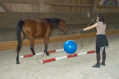 Webinar: Stressverhalten von Pferden - richtig deuten und darauf reagieren