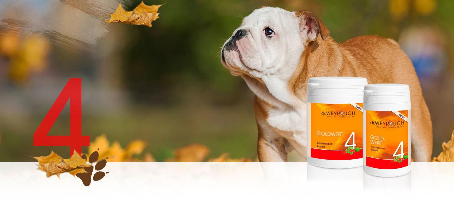 Dr.Weyrauch Goldwert Nr. 4 Hund