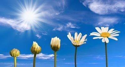 Ateliers de pleine conscience: Guérir avec Ho'oponopono
