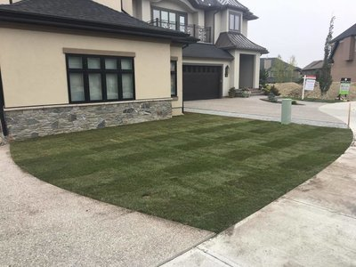 COMING SOON - Kentucky Bluegrass Sod Per Square Foot