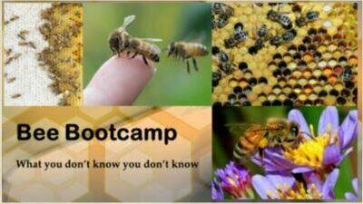 Bee Bootcamp - Sessions 2 through 8