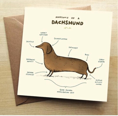 ❤️Dachshund Greeting Card In Stock For Next Working Day Delivery