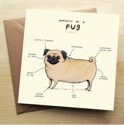 ❤️Pug Greeting Card In Stock For Next Working Day Delivery