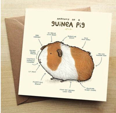 ❤️Guinea Pig Greeting Card In Stock For Next Working Day Delivery