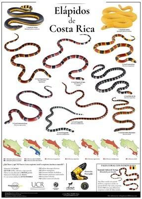 Elapidos de Costa Rica
