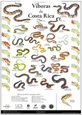 Víboras de Costa Rica