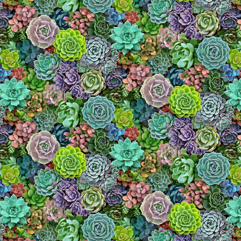 Succulents - 1/2m cut 56967