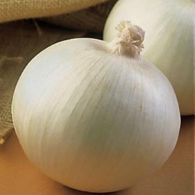 White Onion -- 1 kg