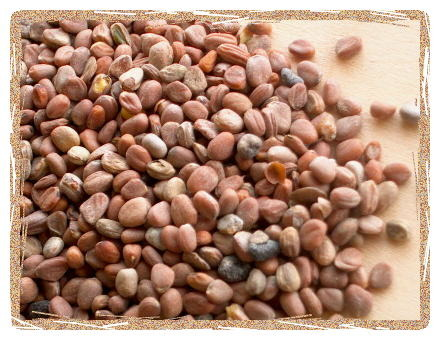 Organic Raddish Seeds