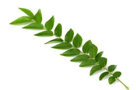 CURRY LEAVES - BUNCH