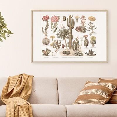 Vintage Cacti Illustration