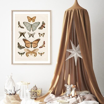Vintage Butterfly Chart