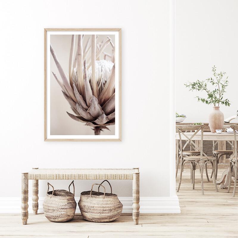 Nude Protea