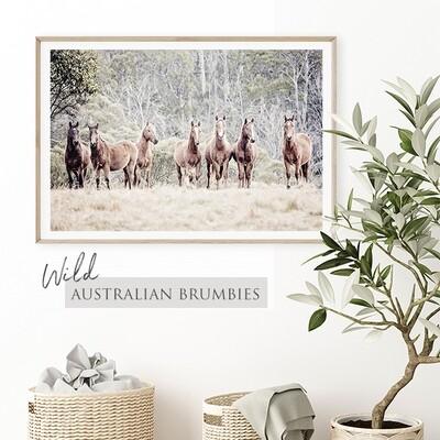 Wild Australian Brumbies