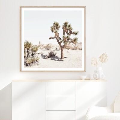 California Desert (square)