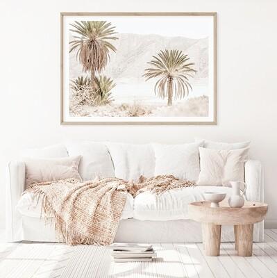 Desert Palm Valley