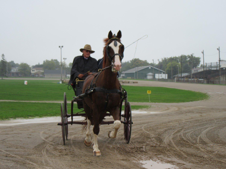 1 - Horse Division