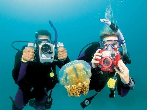 Diving Photo