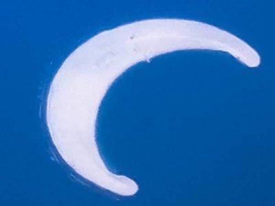 Moon Island Diver