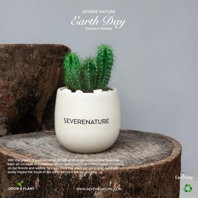Cream Essential Planter ( including cactus plant)