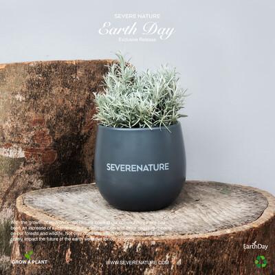 Grey Essential Planter ( including cactus plant)