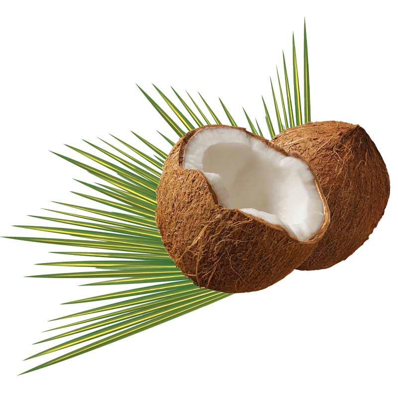 Coconut 1 Unit