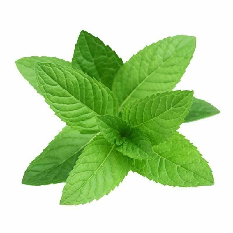 Mint Leaves MVR 150/Kg
