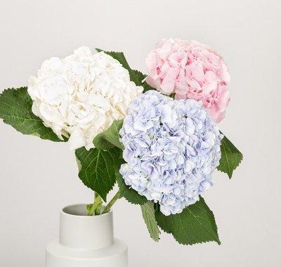 All four Soul Essence Flower essence blends.