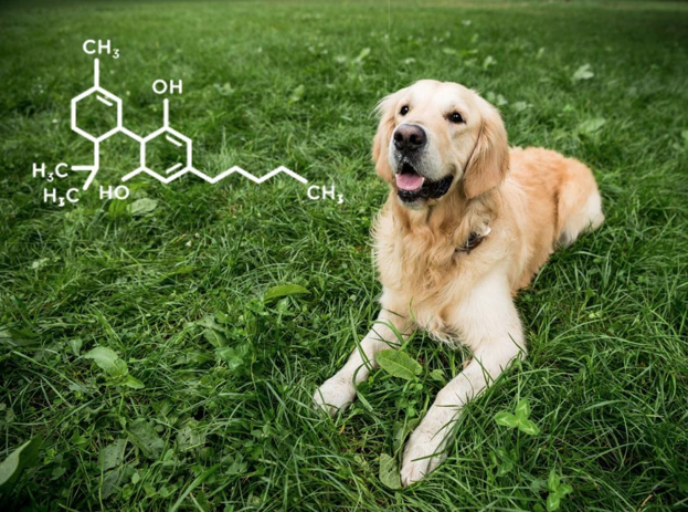 Pain-Less Pets 50mg Tablets