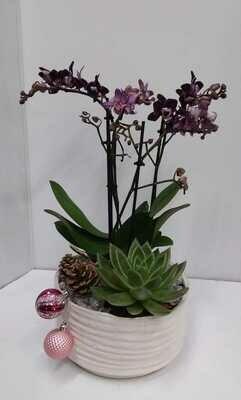 Phalaenopsis orchid planter 60 euro