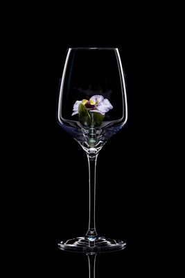 Бокал для белого вина. Орхидея Ванда.