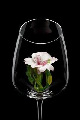 Бокал для белого вина, Альстромерия.