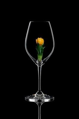 Бокал для шампанского. Крокус жёлтый. Стекло Ридель.
