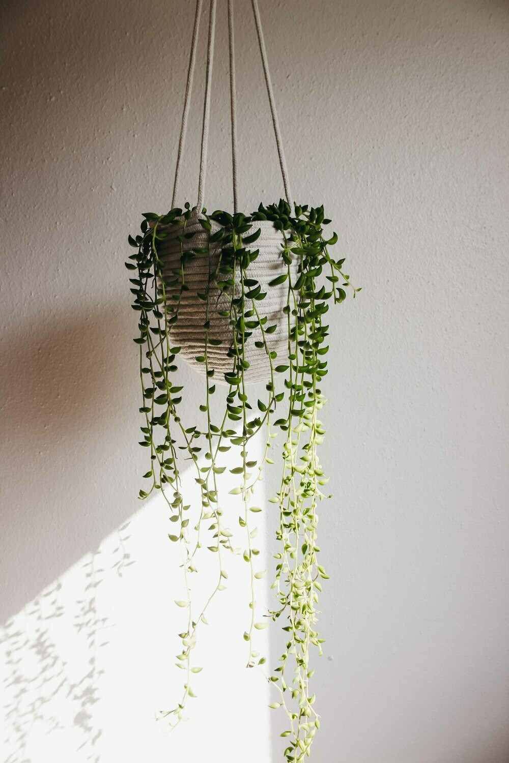Byron Hanging Planter
