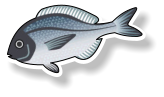 Fresh Black Bream - (per kg)
