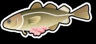 Fresh Cod Roe (per kg)