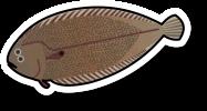 Fresh Dover sole (per kg)