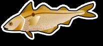 Fresh Haddock Fillet (per kg)