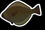 Fresh Flounder (per kg)