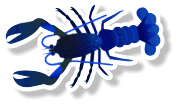 Fresh Live Lobster (per kg)